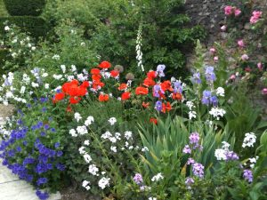 Patriotic display using irises, geraniums, poppies, white honesty & foxgloves.